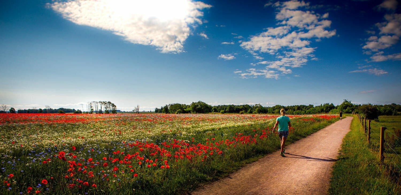 Vandring och utflykter i sommar