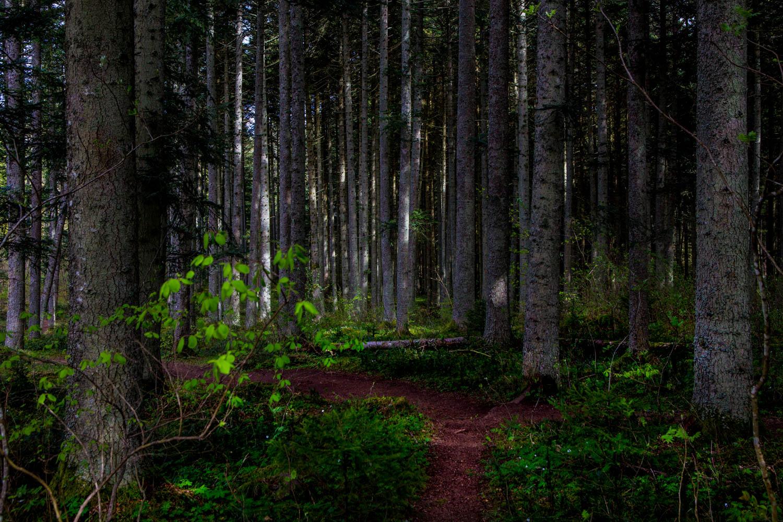 Trolska skogar på Omberg